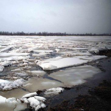 Årets islossning i Lainio älv 2015